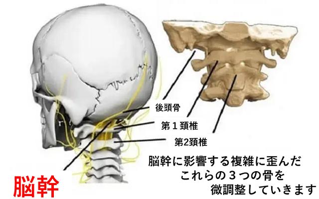 脳幹の図3
